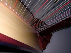 photo close up of Carol Robbins' harp